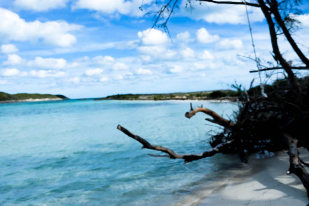 Exploring Rose Island